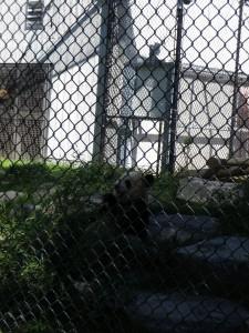 Zoo-08