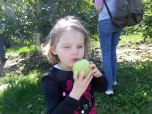 Pommes-10