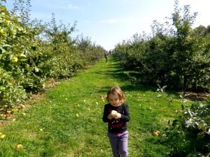 Pommes-11