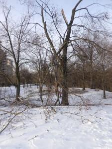 hiver-19