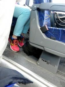 megabus-08