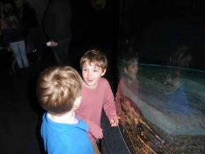 Aquarium-07