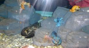 Aquarium-09