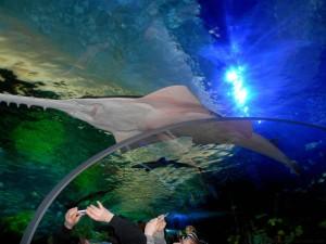 Aquarium-16