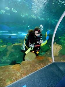 Aquarium-17