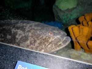Aquarium-20