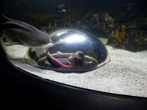 Aquarium-34
